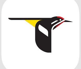 Merlin Bird Photo ID, conoce que especie de pájaro es con solo una fotografía