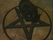 vampire_clans_cat_tremere
