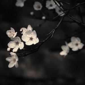 Dark_Spring_II_by_BabyJoan