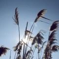 plants-sky