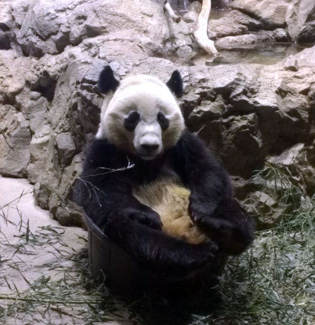 Bei Bei in bucket 2