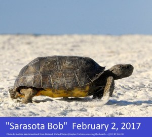 Sarasota Bob_-_Flickr_-_Andrea_Westmoreland
