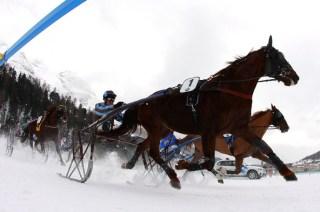 White Turf Race