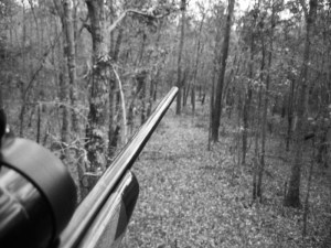 Rifle hunting