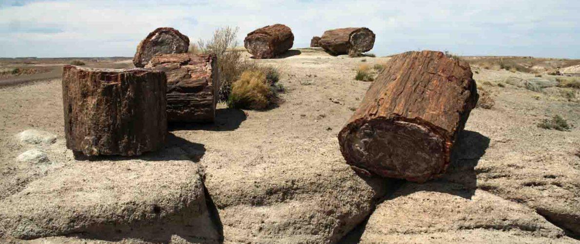 Petrified Forest Nationalpark in Arizona