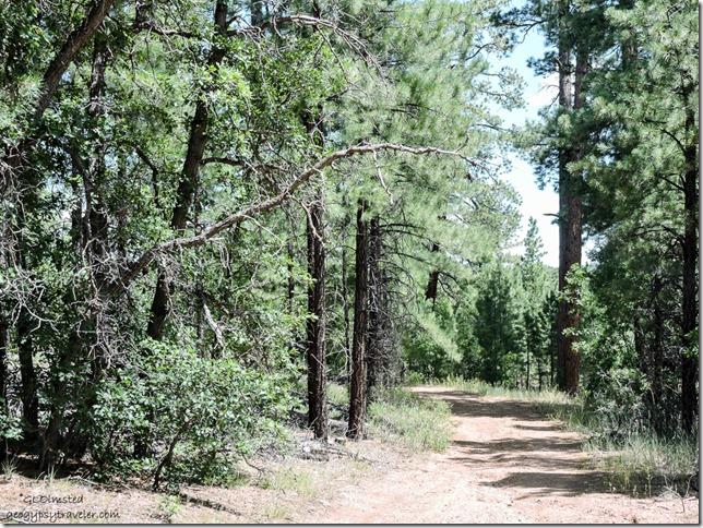FR292L Kaibab National Forest Arizona