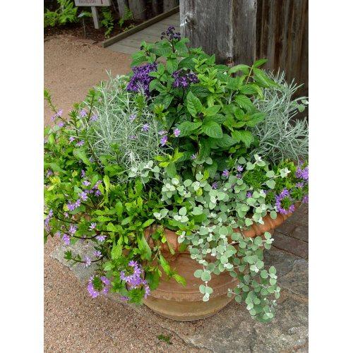 Medium Crop Of Creative Garden Containers