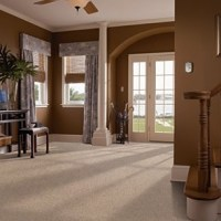 4 Incredible Pet Friendly Carpets that Pet Owners Will LOVE!