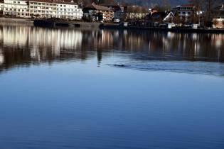 poisson lac Gérardmer (1)
