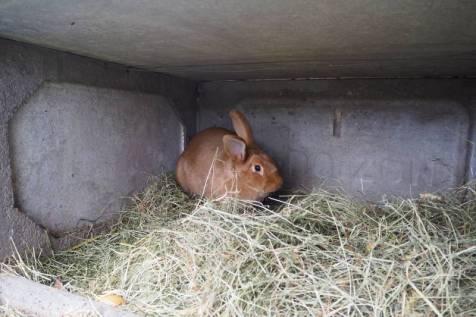 Un petit lapin de chez Louis