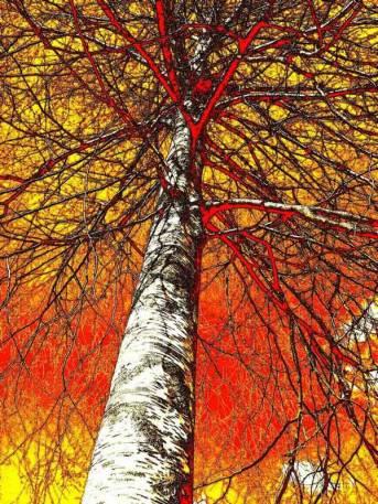 arbre de vie2