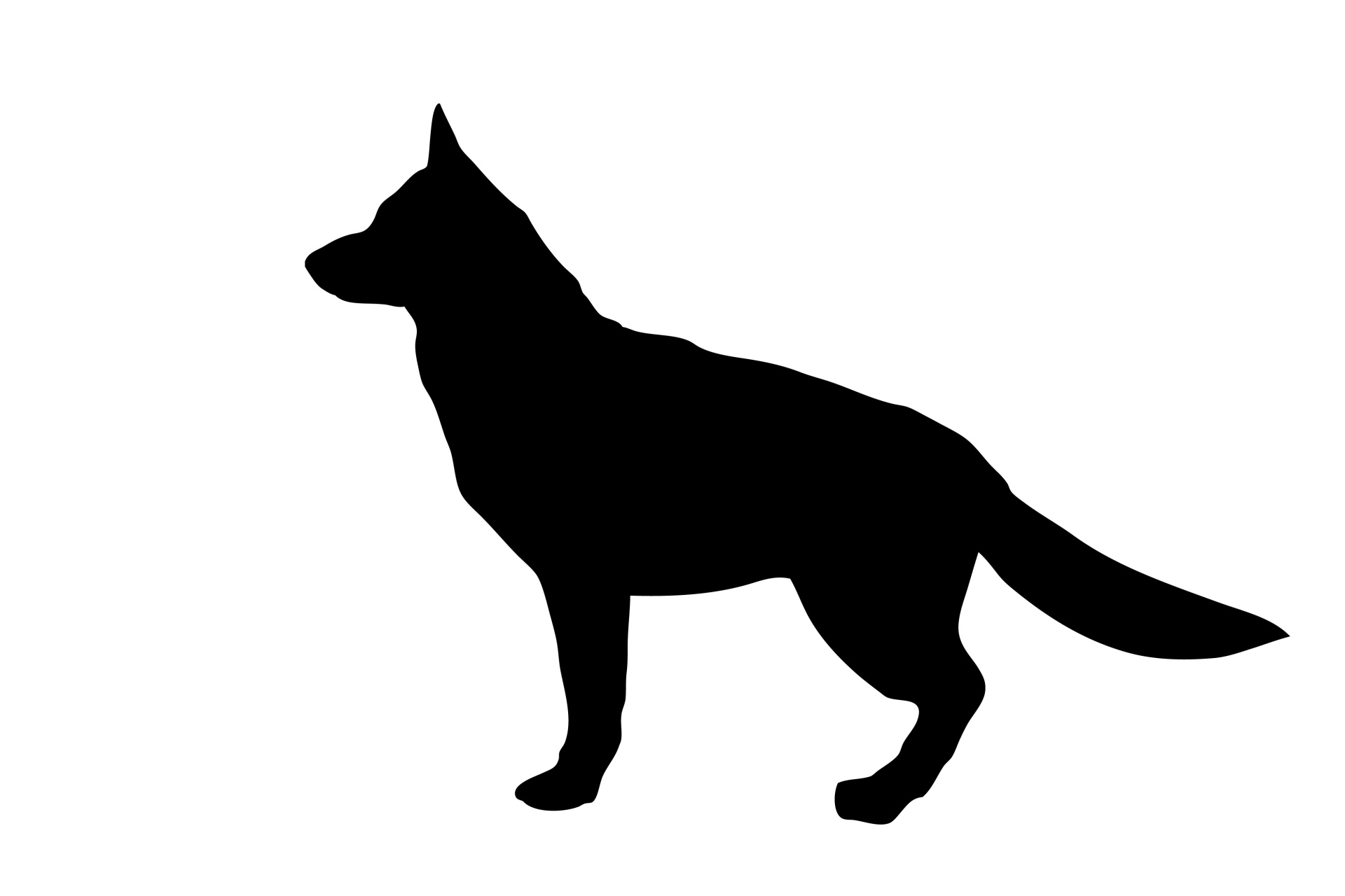 Fullsize Of German Shepherd Sitting
