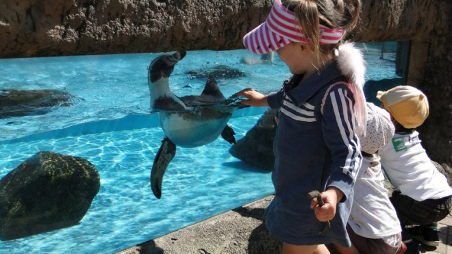making friends with penguins