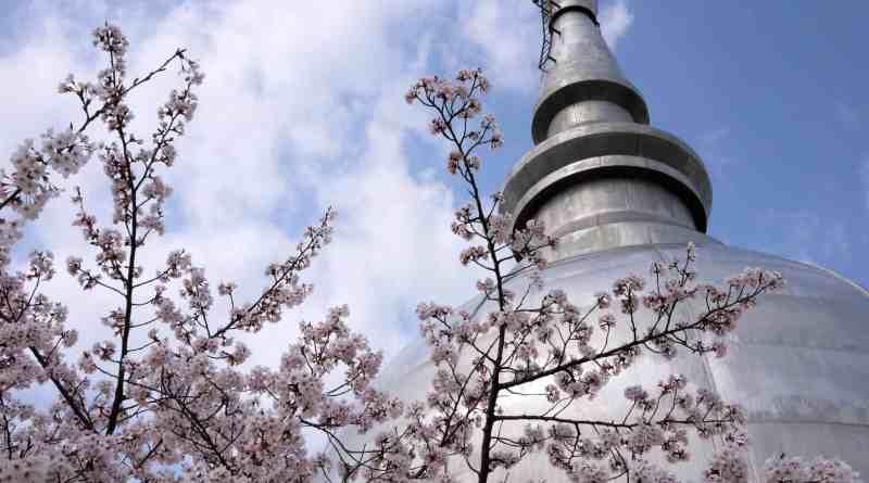 Hiroshima Peace Pagoda in sakura cherry blossom season