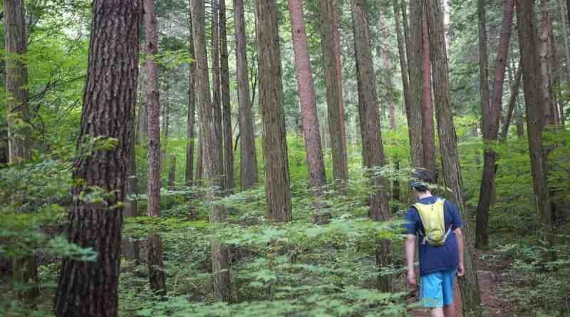Trail to Omusubi Iwa