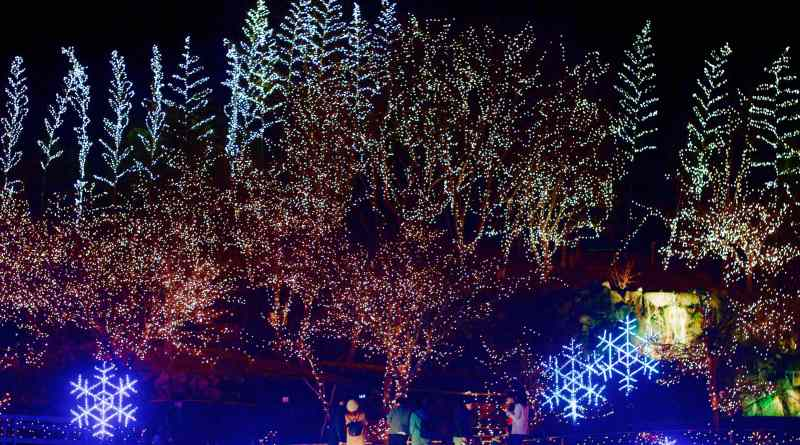 Winter Illuminations at Bihoku Hillside Park - 16 of 35