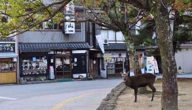 First View Deer Empty Street