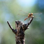 Check Out The Dragonflies by the River