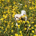 Suki in the Wildflowers Enjoying the Day