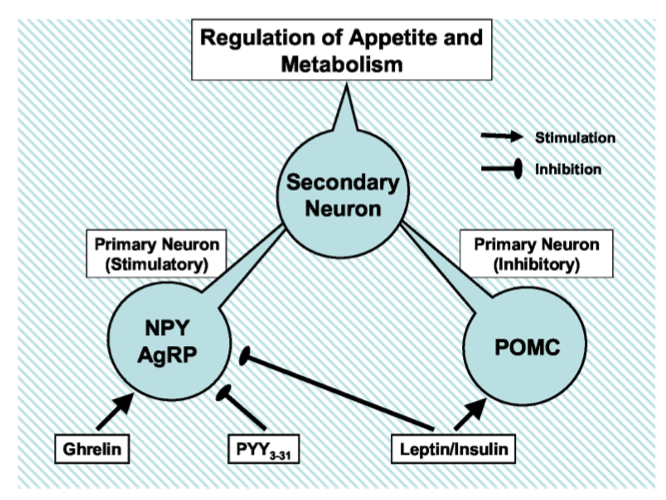 Regulation of Appetite