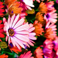 Cute Colorful Wallpapers 51 Images