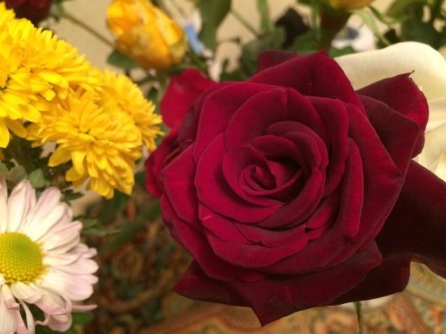 цветы от елены (13)