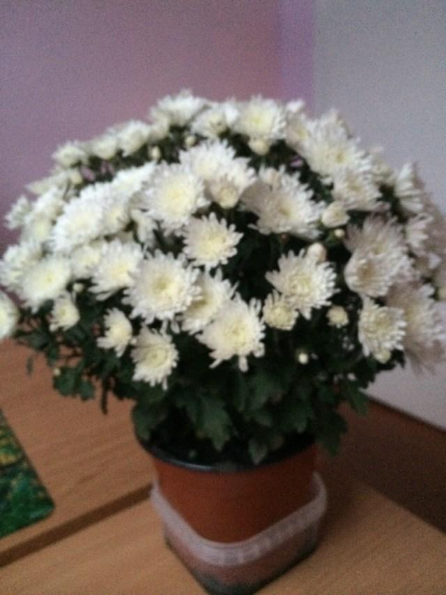 цветы от елены (15)