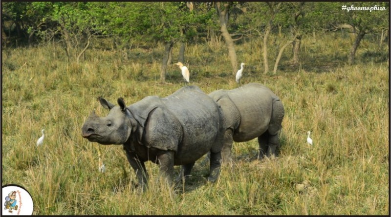 The ultimate wildlife experience at Kaziranga