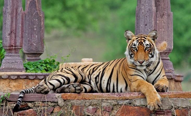 Machli-resting