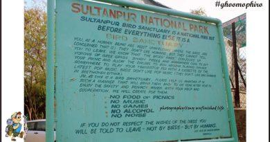Sultanpur Sanctuary- Bird watcher paradise