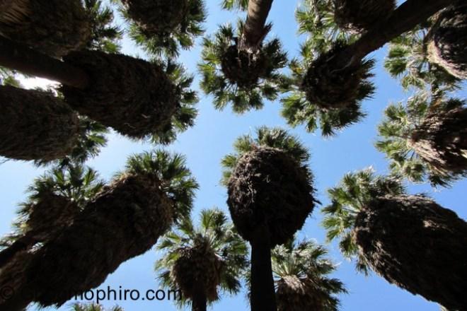 -Palm Springs - Generic 2-2