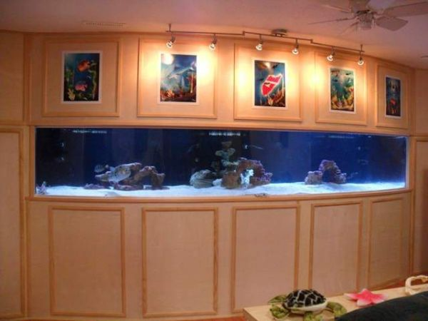 1000 Gallon Fish Tank