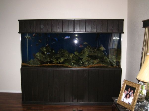 giant aquariums | Tanks 300gal.  by Trifisher | Page 12