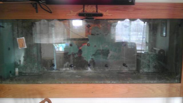 Craigslist Fish Tanks for Sale http://giantaquarium.wordpress.com/2013