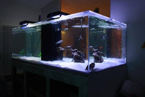 720 gallon fish tank including sump 96 x48 x30 3 4 acrylic tank made