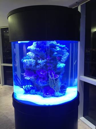 giant aquariums   Tanks 300gal.  by Trifisher