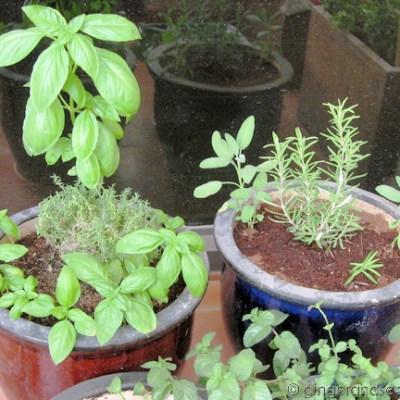 Garden Update – May 2008