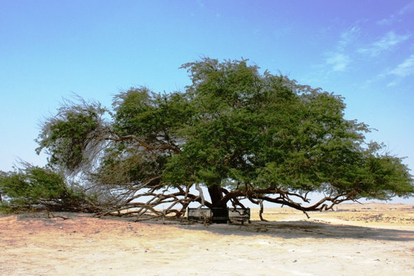 Bahrain Tree of Life
