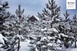 La vieille maison à travers les arbres