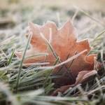 Nature morte et gelée matinale