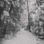 Neige... forêt... noir et blanc