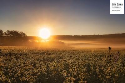 Gelée et soleil du matin