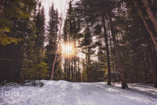 Une marche dans la forêt
