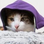 かわいいだけじゃだめ!うちの愛猫にプレゼントすべき首輪はこれ!
