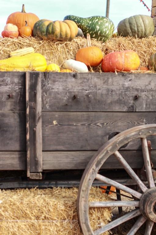 wagon  www.girlontherange.com