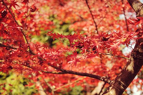 どこか切ない芝生に降り積もる紅葉のフリー写真素材(商用可)