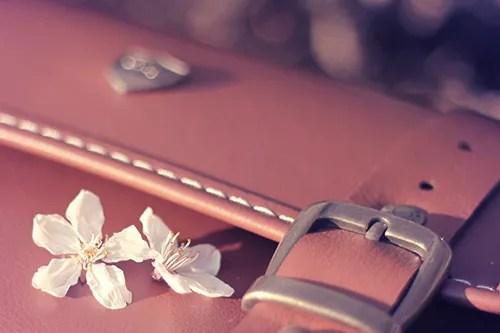 カバンに舞い落ちた桜の花びらたちのフリー写真素材(商用可)