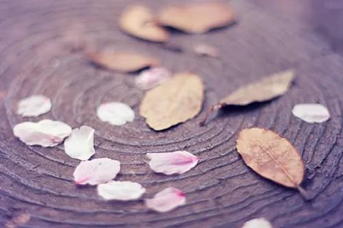 落ち葉と桜の花びらが告げる冬の終わり/春の始まりのフリー写真素材(商用可)