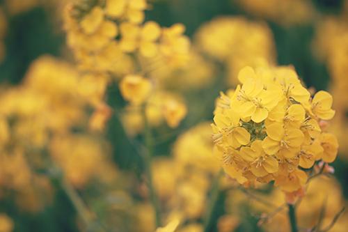 クローバーによく似たハート型の葉っぱたちのフリー写真素材(商用可)
