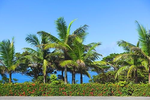 リゾート感満載の青い海と生い茂ったヤシの木のフリー写真素材(商用可)